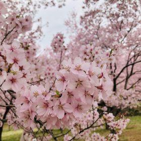 春期講座受付4/3(金)まで!